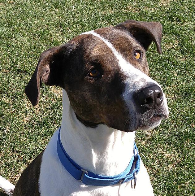 Duke/SPCA of Hancock County photo
